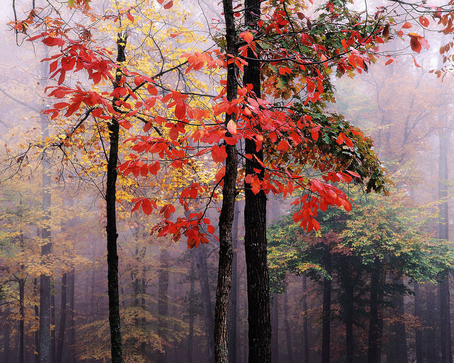 autumn, branches, fog, foliage, forest