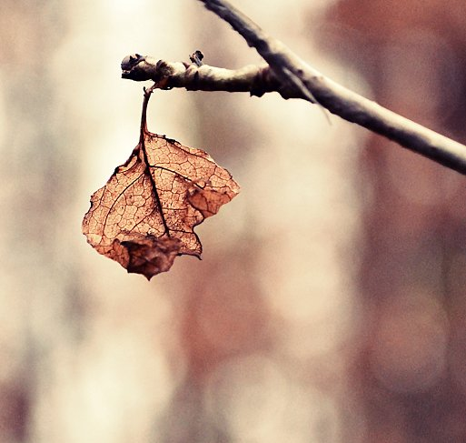 autumn, last, leaves, miscellaneous, photography