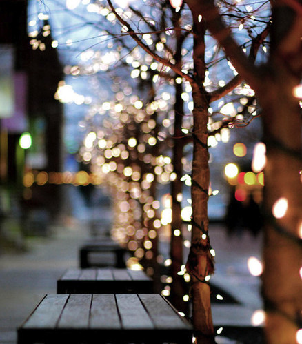 bench, christmas, christmas lights, city, festive