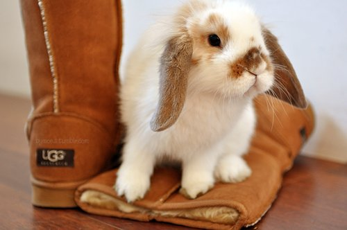 boots, bunny, cute, rabbit, shoes