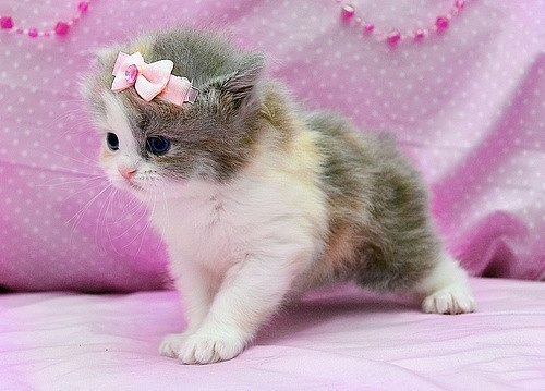 Cat Cute And Kitten Image 244595 On Favim Com
