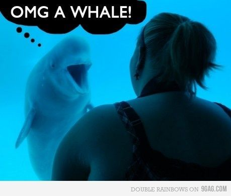 dolphin, funny, human, love, omg, omg a whale, sea, shock, shocked, whale