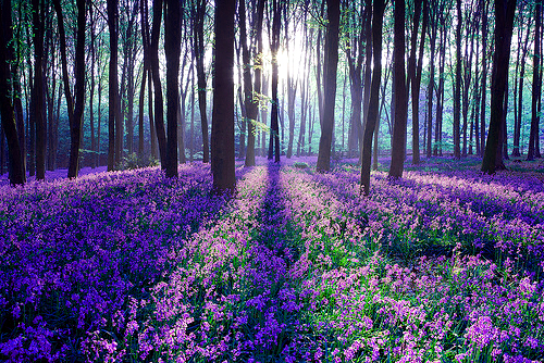 flowers, forest, landscape, photography, tree
