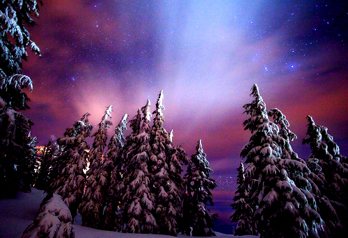 northern lights, snow, stars, trees, winter