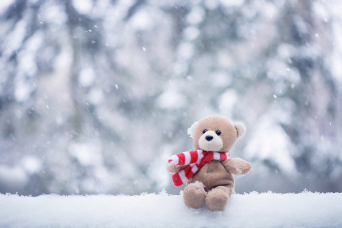 bear, christmas, ear, forrest, merry, pretty, red, snow, teddy, white