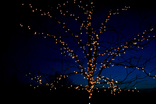 beautiful, christmas, lights and tree