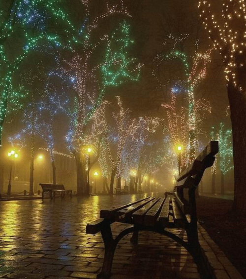 bench, christmas, lights, night, travel