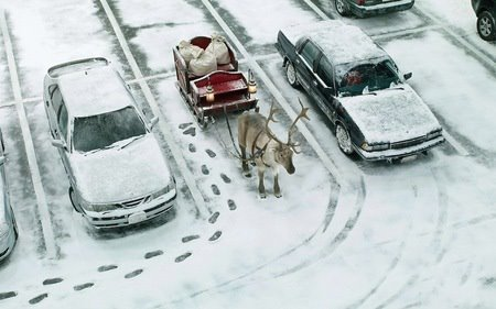 cars, christmas, christmas eve, december, deer