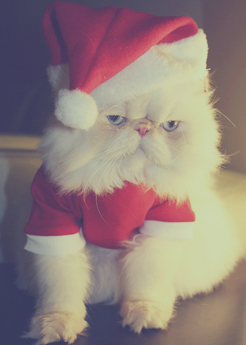 cat, christmas, cute, hahahaha, red