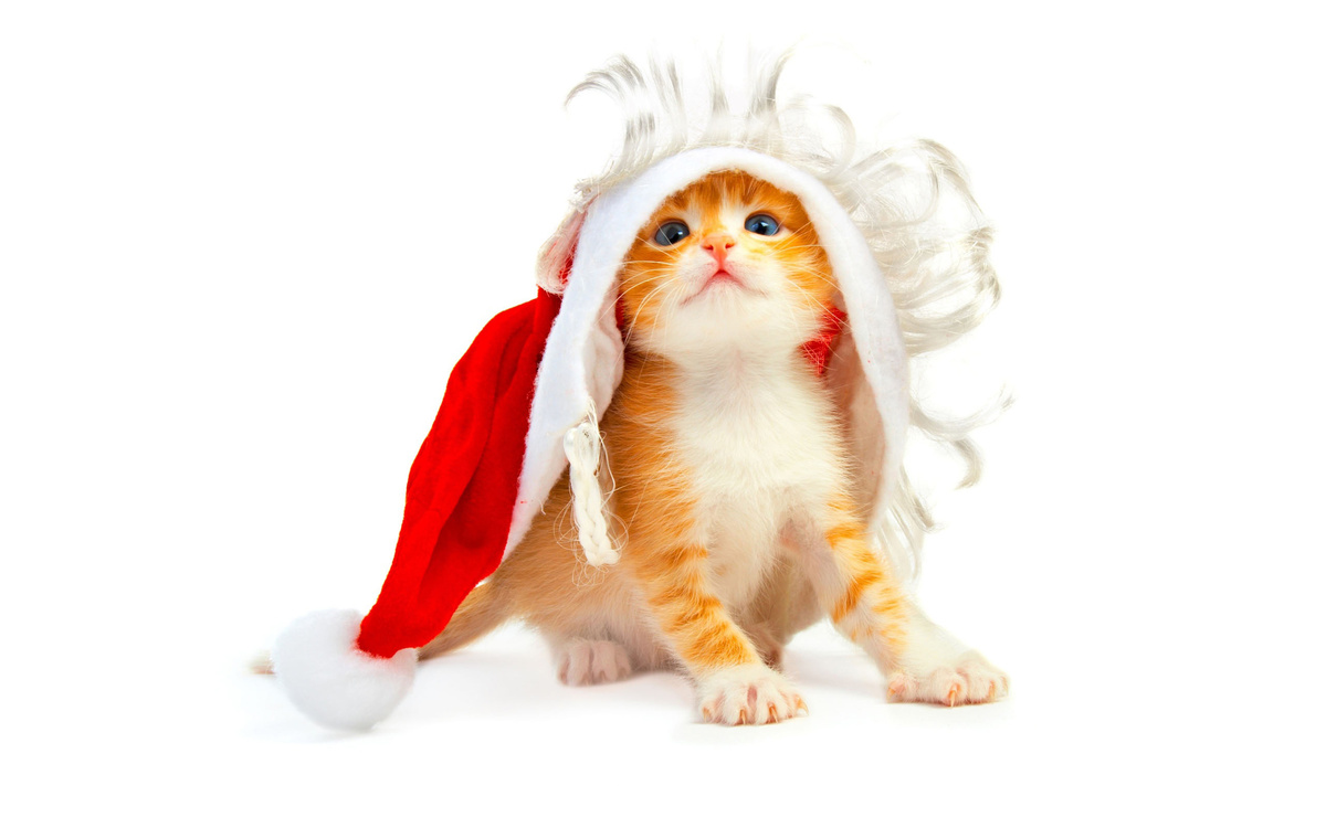 cat, christmas, funny, gato, hat