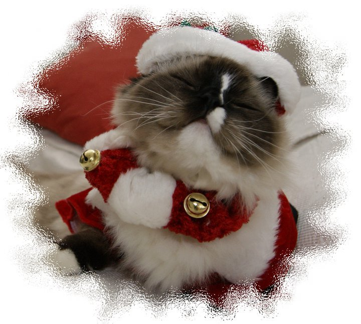 cat, merry christmas, santa claus