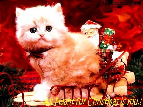 cats, christmas, christmas decorations, kitty, merry christmas