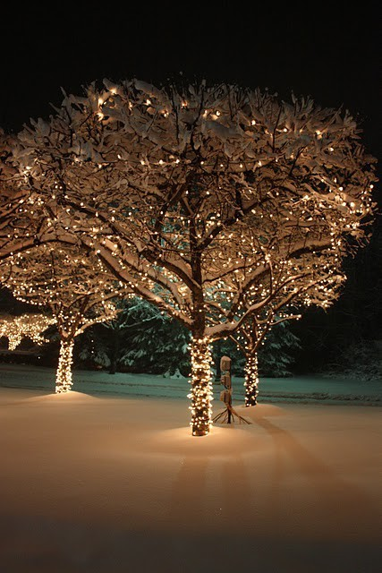 christmas, cold, holidays, lights, seasons, snow, tree, weather, winter
