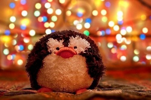 christmas, cute, penguin