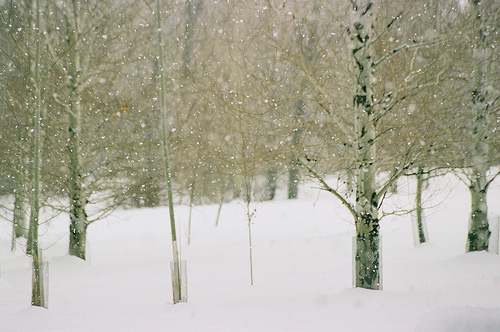 christmas, december, nature, photography, snow, trees, winter