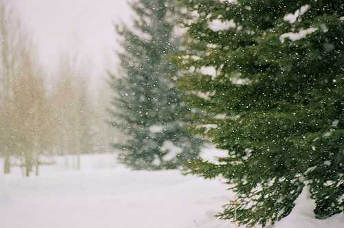christmas, december, nature, photography, snow, snowfall, trees, winter