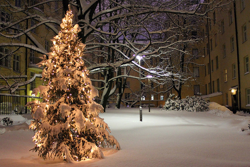 Christmas lights snow tree winter image on