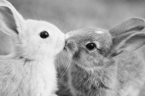 adorable, black and white, bunnies, bunny, cute