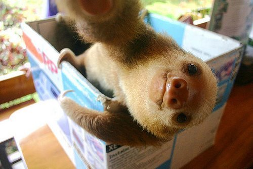 adorable, cute, sloth