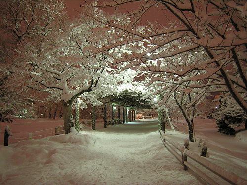 amazing, beautiful, snow, winter, winter snow