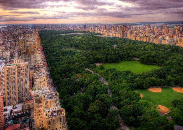america, central park, love, manhattan, nature