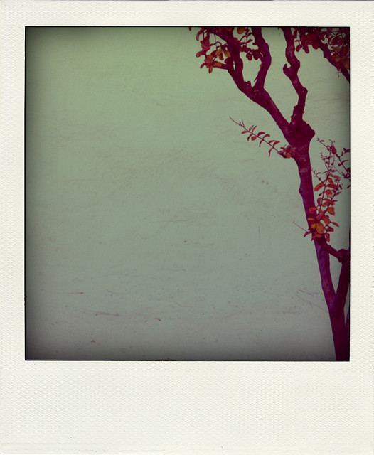 analog, film, polaroid, tree