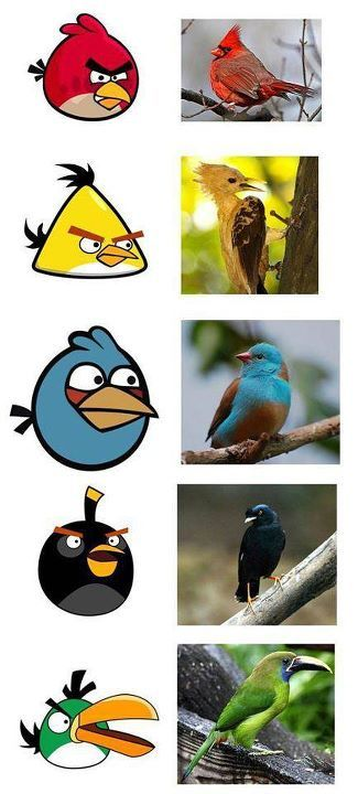 angry birds, animals, apple, application, birds