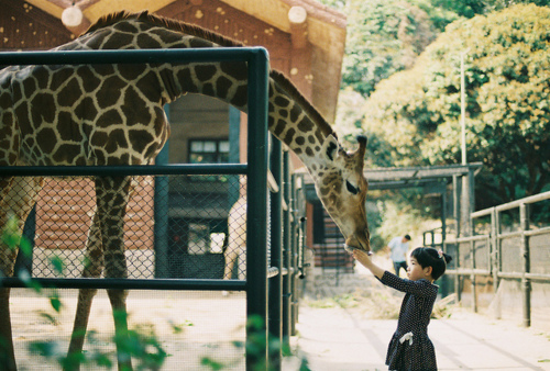 animal, cute, giraffe, girl