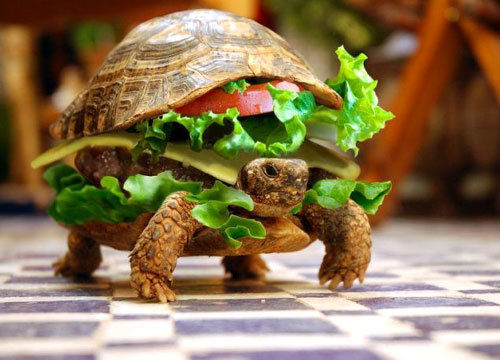 animals, cute, sandwich, turtle