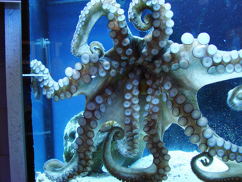 aquarium, blue, fish, octopus, squid, tentacles, water