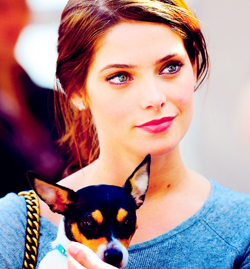ashley greene, breaking dawn, chihuahua, cute, dog