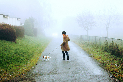 autumn, cavalier, coat, dog, fog, ginger, girl, puppy, run, street, walk, winter