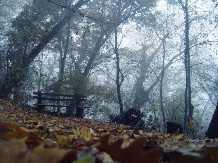 autumn, cute, dark, fog, forest