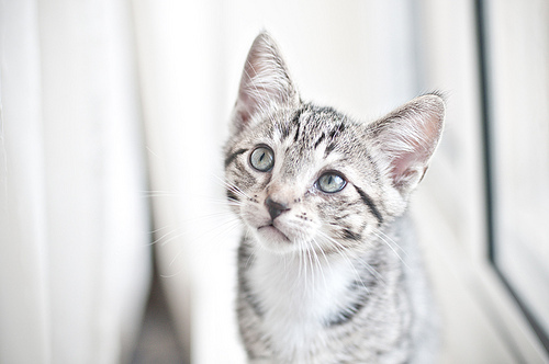 baby, cat, cute, green eyes, kitten, photo, photography, tiger