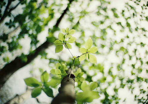 beautiful, brown, green, hipster, indie, leaf, light, nature, natureal, photo, photography, spring, sun, tree, trees, white, wood