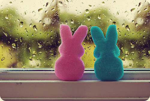 beautiful, bunnies, colors, cute, i love u, peeps, pretty, rain