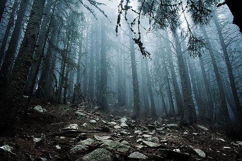 beautiful, fog, forest, mist, photo
