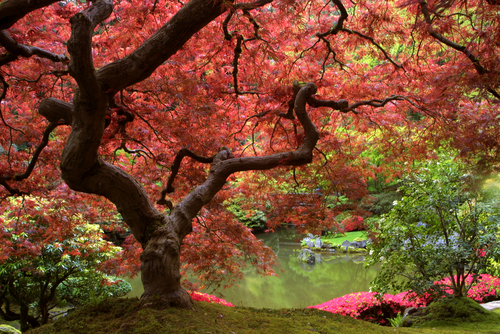 Beautiful Nature Red Trees Woods Image 253627 On
