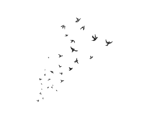 Simple black and white bird drawing - photo#5