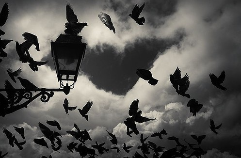 bird, birds, black and white, clouds, flying