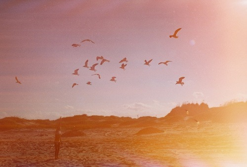 bird, birds, film, forest, girl, girls, guy, guys, hipster, indie, landscape, nature, sky, tree