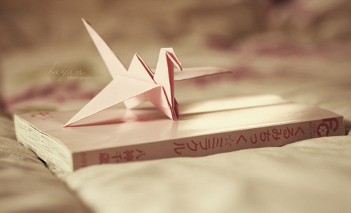 bird, book, cool, cute, great, morning, omg, photography, pink, pretty, sun