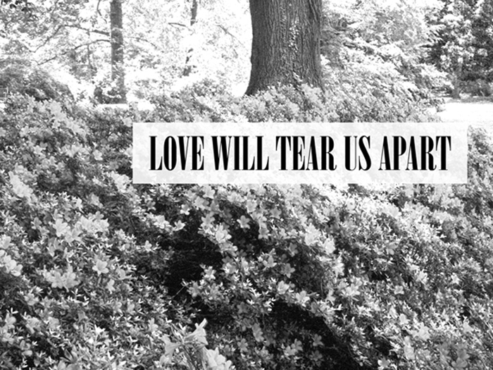 black and white, flowers, joy division, love, love will tear us apart
