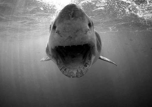 black and white, ocean, sea, shark