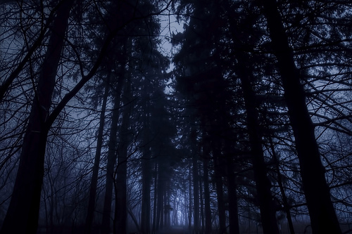 blue, dark, darkness, florest, night, trees