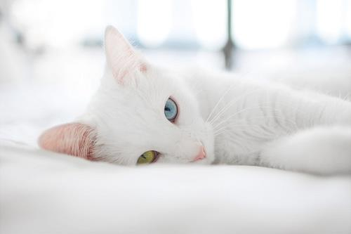 blue eye, cat, cat eyes, cute, green eye