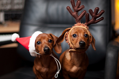 bolado, christmas, cute, dog, doggy