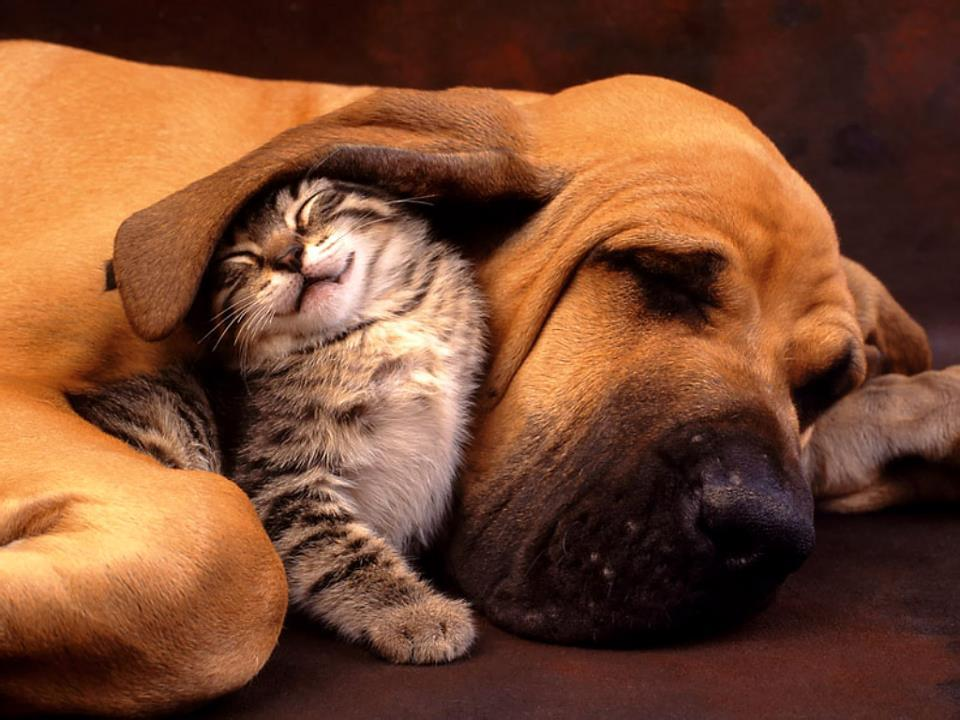 cat, cat and dog, cute, dog, friends