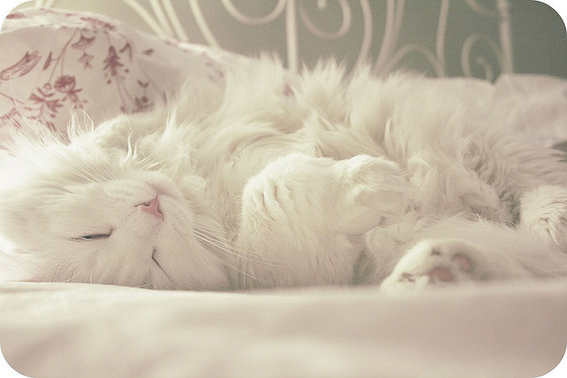 cat, dreamy, fur, pastel, pretty