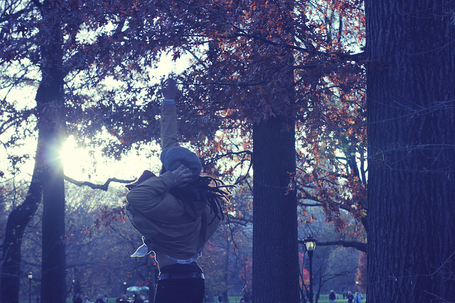 central park, fall, new york, photo, photography